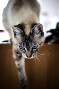 Alek cat