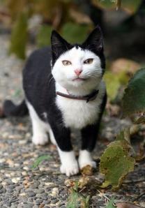 Barlow cat