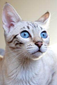 Deryn cat