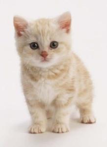 Cress kitten