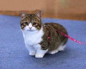 Iko cat