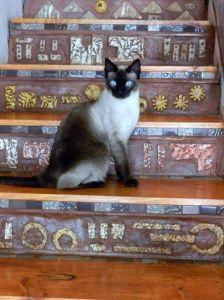 Kaito cat