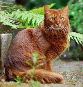 Scarlet cat